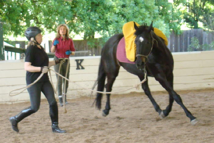 In the young horse group, Adelheid was also looking for attention and cooperation from Whisper