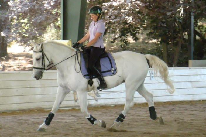 Day two Ally sported her gorgeous new saddle pad –hey Lesley I want one just like that!