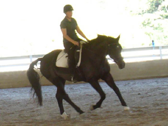Robin & Elise: Black horse, dark arena, bright sunshine. A photog's nightmare, but this look at his canter was irresistible.