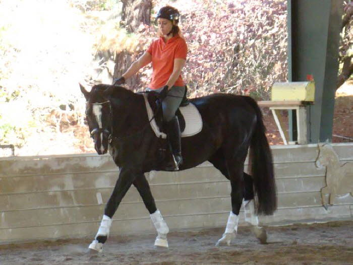 It shows as he becomes more and more soft and willing under saddle.