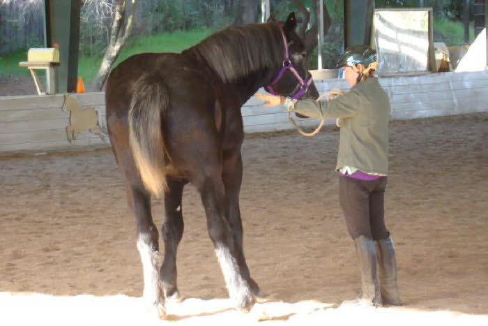 Bonnie McCurdy attended her first clinic with Jack, a 3 year old Percheron – remarkably sensitive and responsive.
