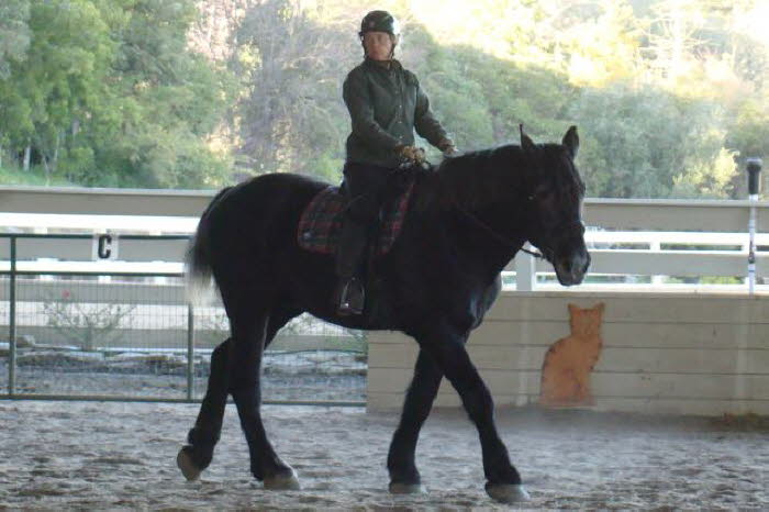 Jack was steady and willing under saddle.